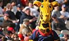 Cricket Betting: Lanky Backed To Win Mascot Race
