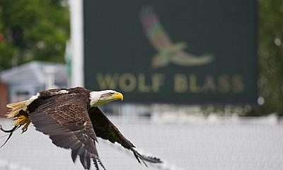 Wolf the Eagle takes flight at Lord's ahead of the Cricket World Cup